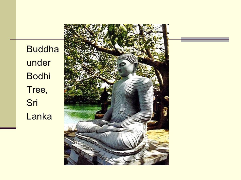 Buddha under Bodhi Tree, Sri Lanka