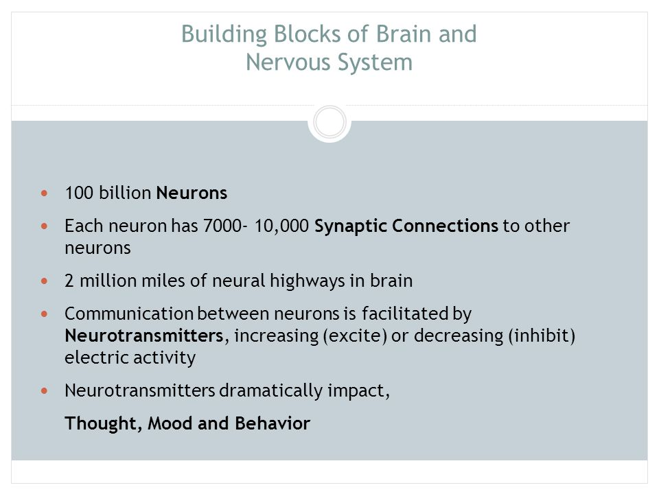 Building Blocks of Brain and Nervous System