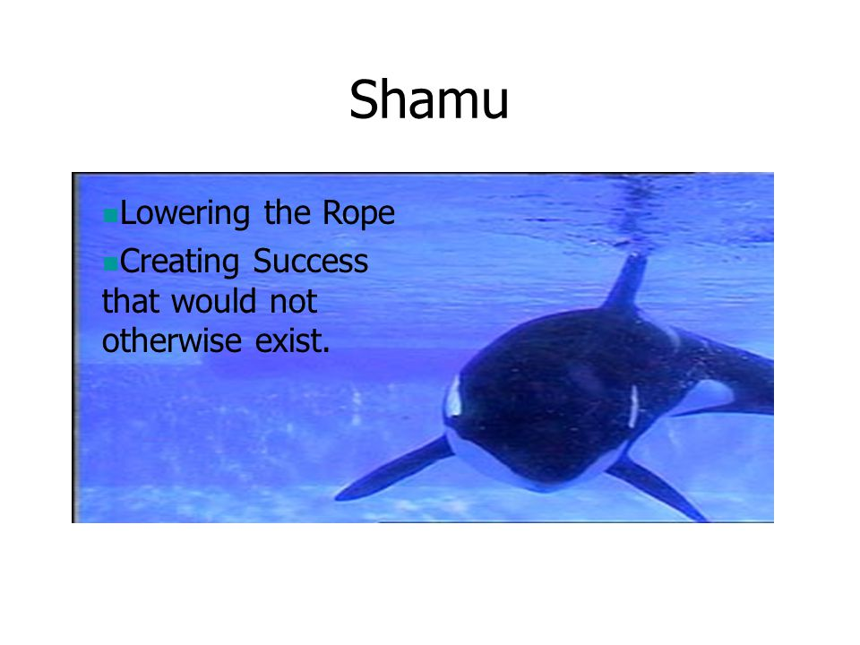Shamu Lowering the Rope
