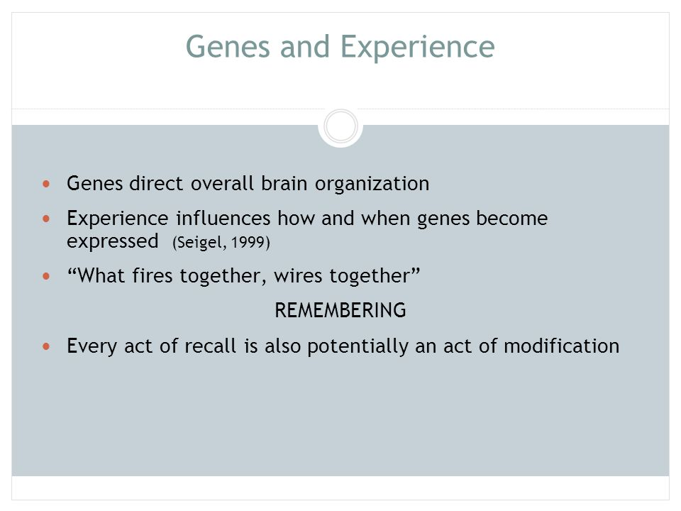 Genes and Experience Genes direct overall brain organization. Experience influences how and when genes become expressed (Seigel, 1999)