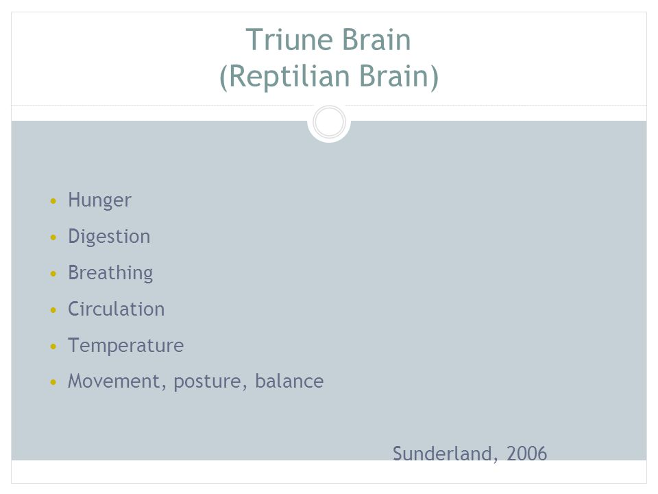 Triune Brain (Reptilian Brain)