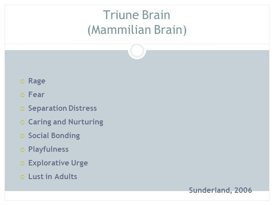 Triune Brain (Mammilian Brain)