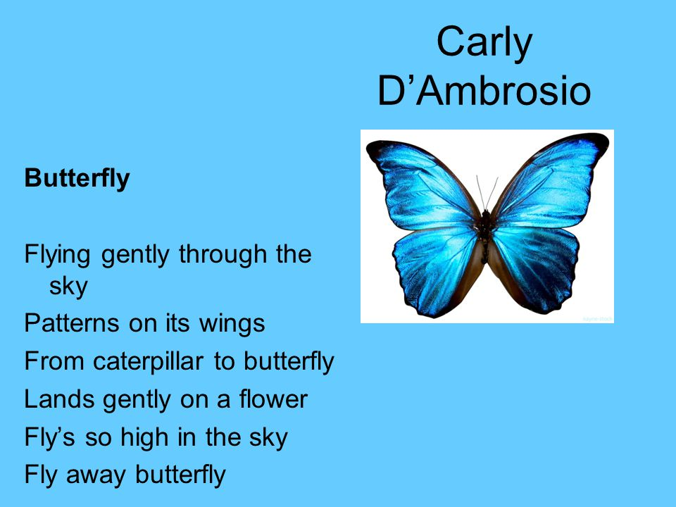 Carly D'Ambrosio Butterfly Flying gently through the sky