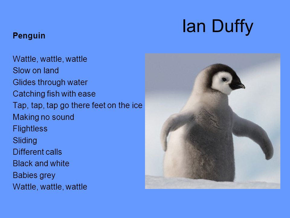 Ian Duffy Penguin Wattle, wattle, wattle Slow on land