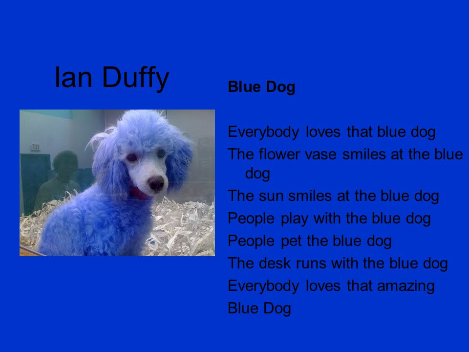 Ian Duffy Blue Dog Everybody loves that blue dog