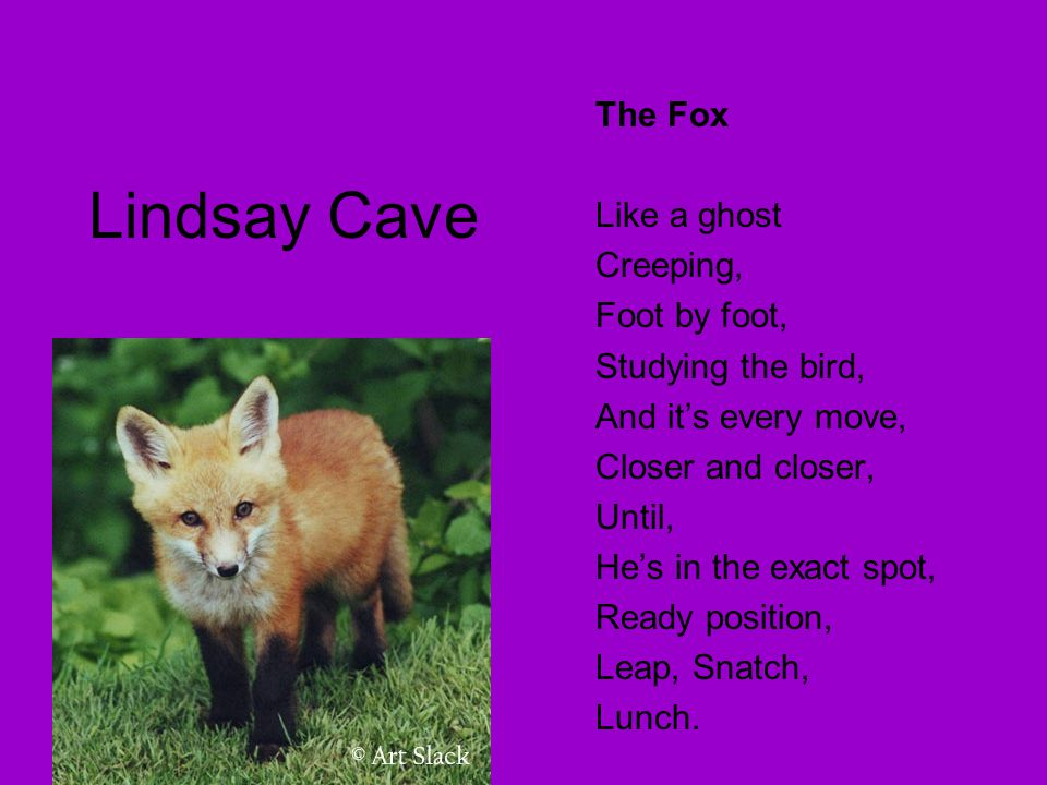 Lindsay Cave The Fox Like a ghost Creeping, Foot by foot,
