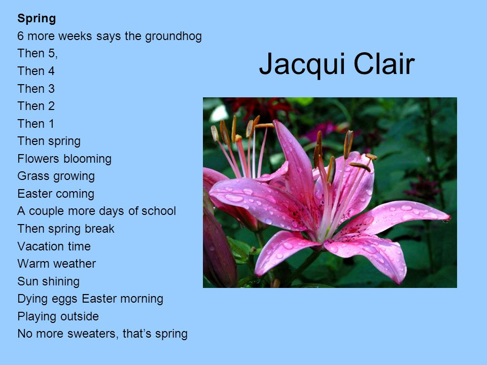 Jacqui Clair Spring 6 more weeks says the groundhog Then 5, Then 4