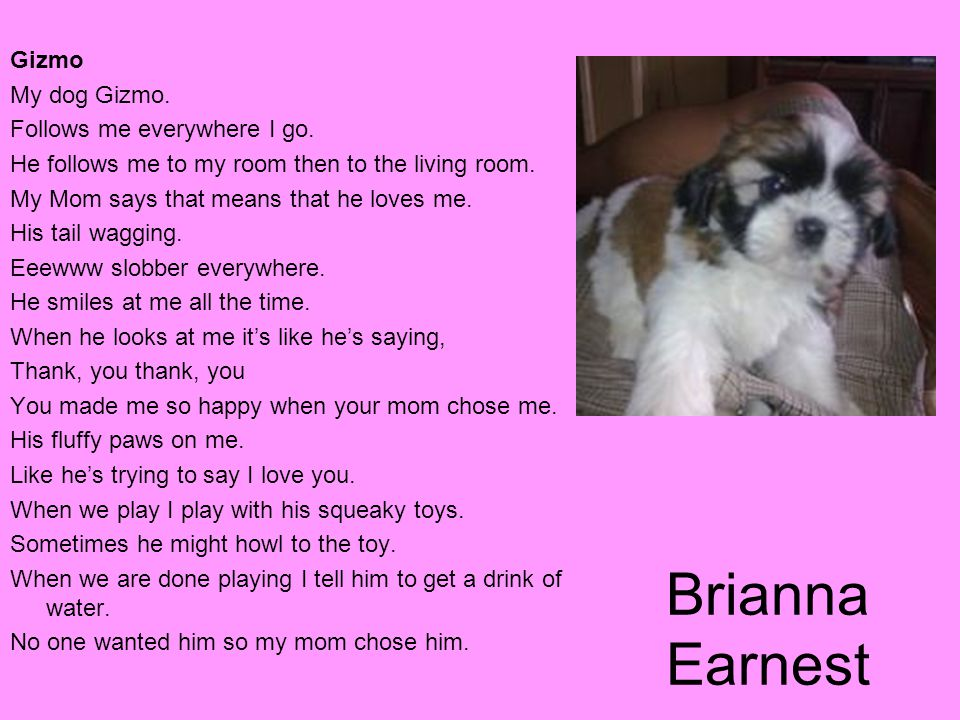 Brianna Earnest Gizmo My dog Gizmo. Follows me everywhere I go.