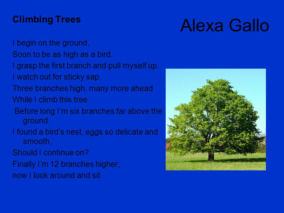 Alexa Gallo Climbing Trees I begin on the ground,