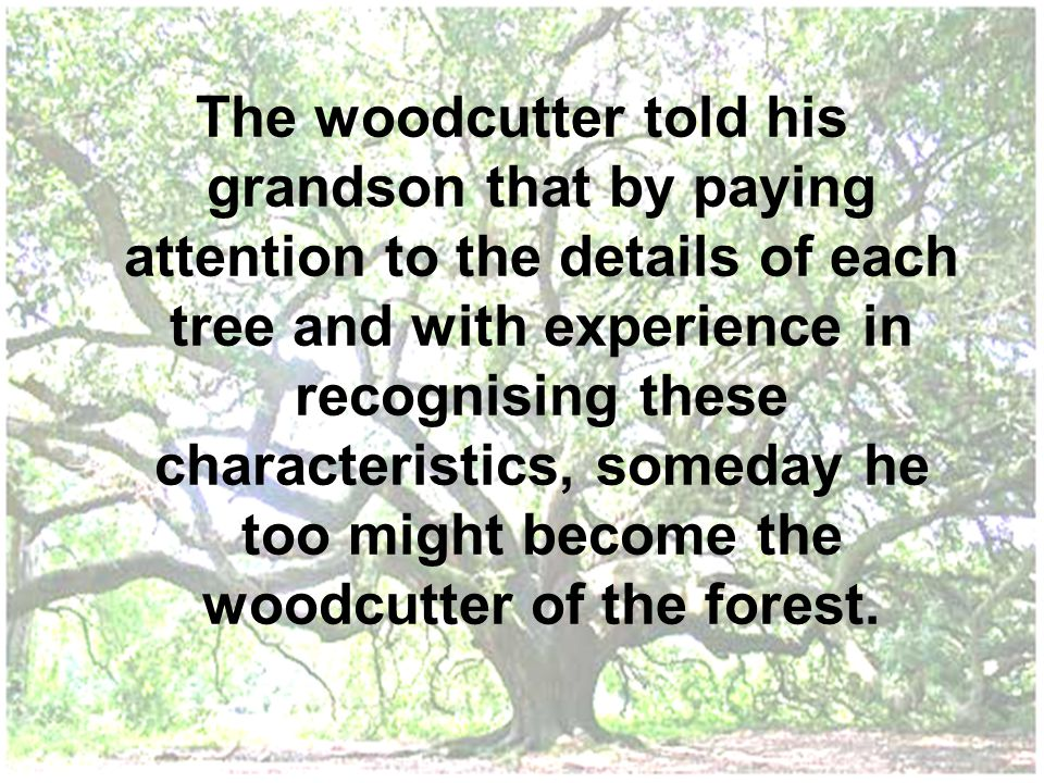 The woodcutter told his grandson that by paying attention to the details of each tree and with experience in recognising these characteristics, someday he too might become the woodcutter of the forest.