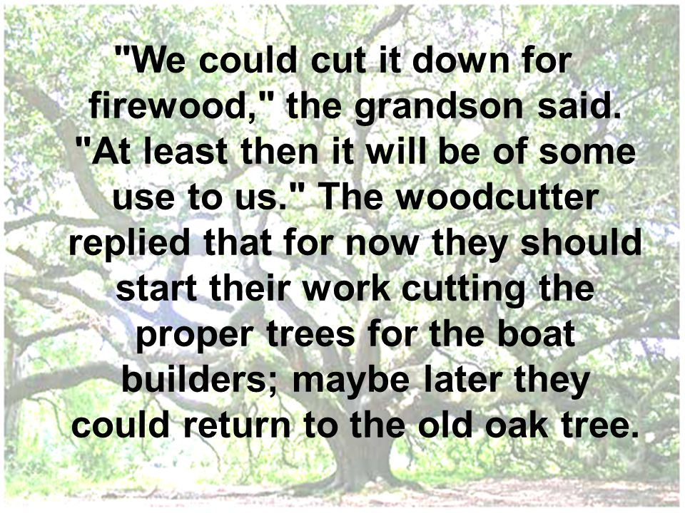 We could cut it down for firewood, the grandson said