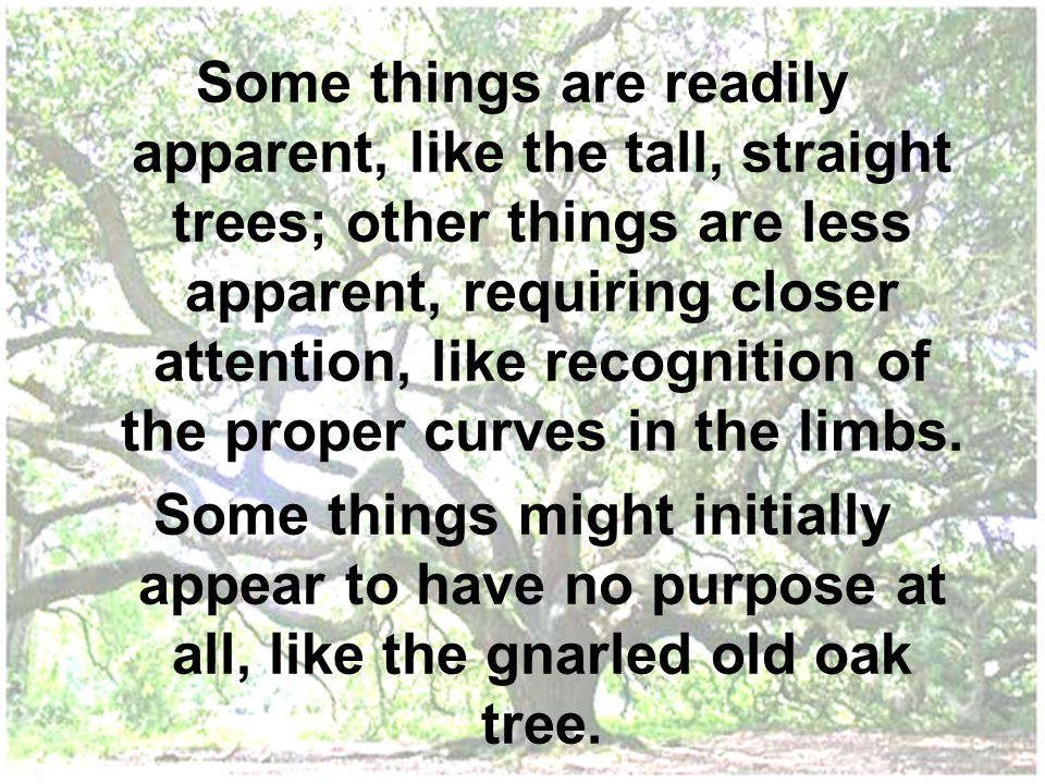 Some things are readily apparent, like the tall, straight trees; other things are less apparent, requiring closer attention, like recognition of the proper curves in the limbs.