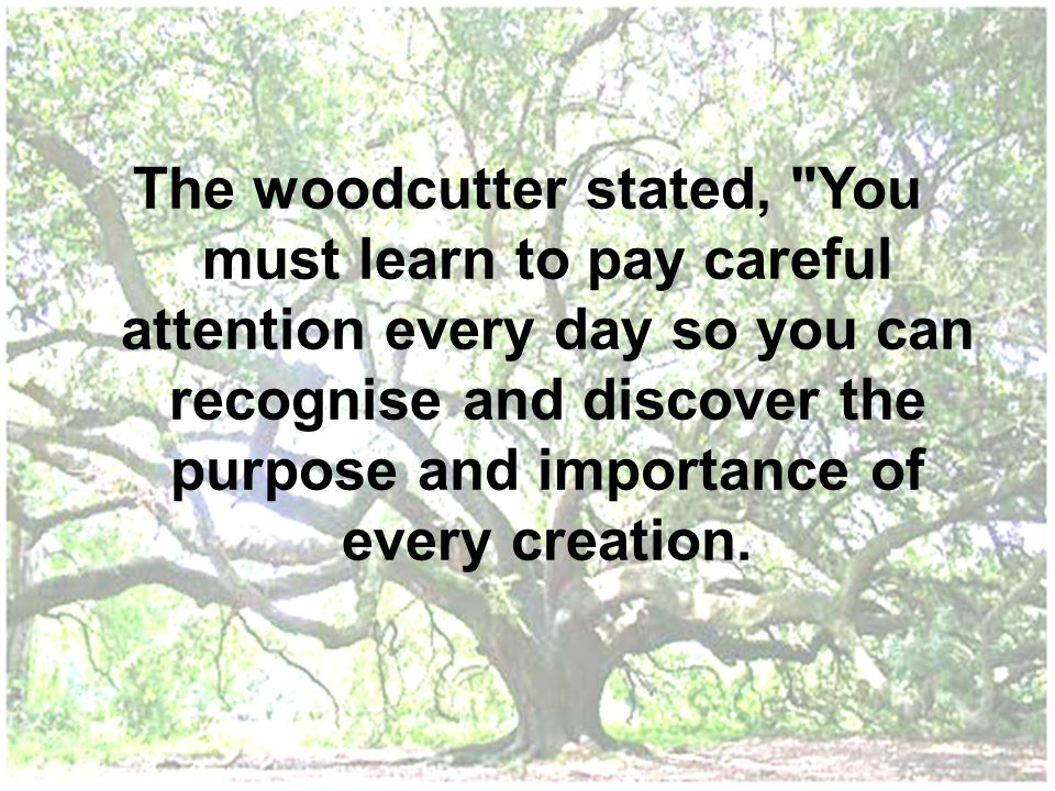 The woodcutter stated, You must learn to pay careful attention every day so you can recognise and discover the purpose and importance of every creation.