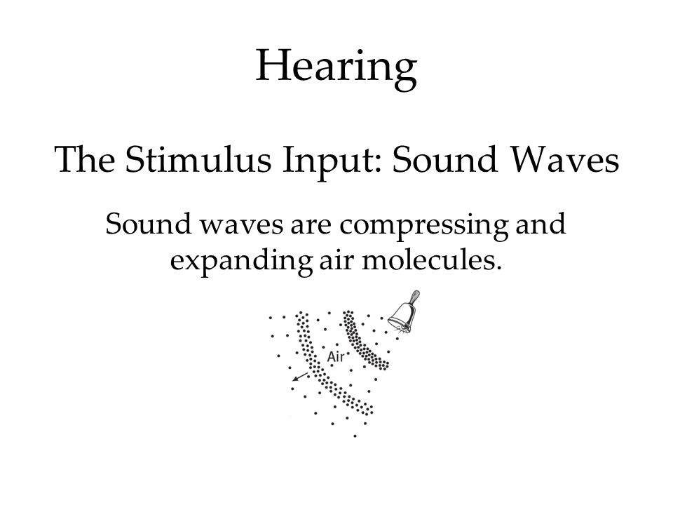 Hearing The Stimulus Input: Sound Waves