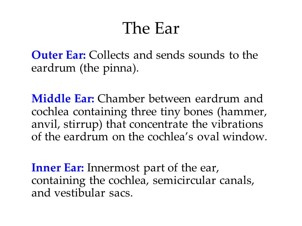 The Ear Outer Ear: Collects and sends sounds to the eardrum (the pinna).
