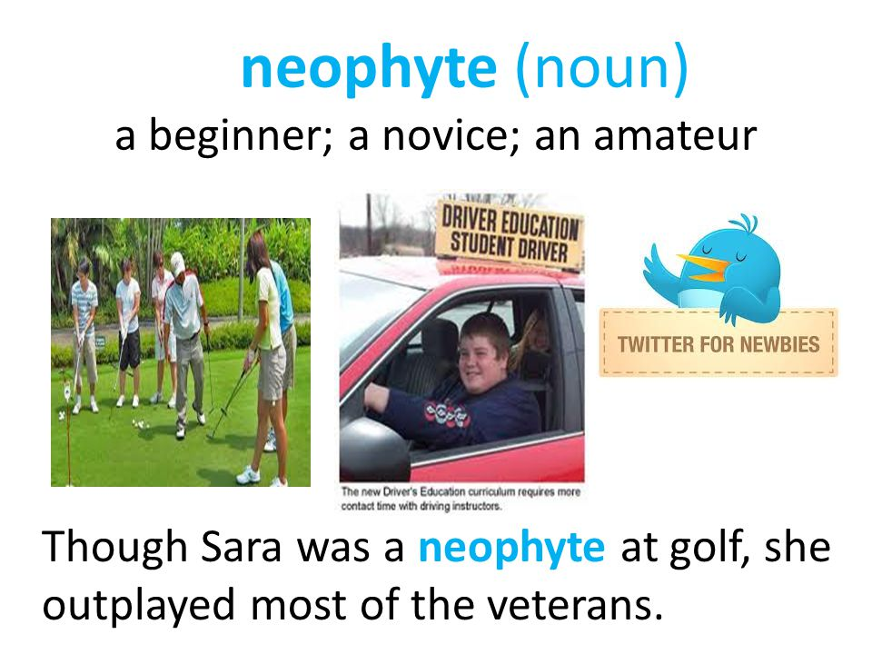 neophyte (noun) a beginner; a novice; an amateur