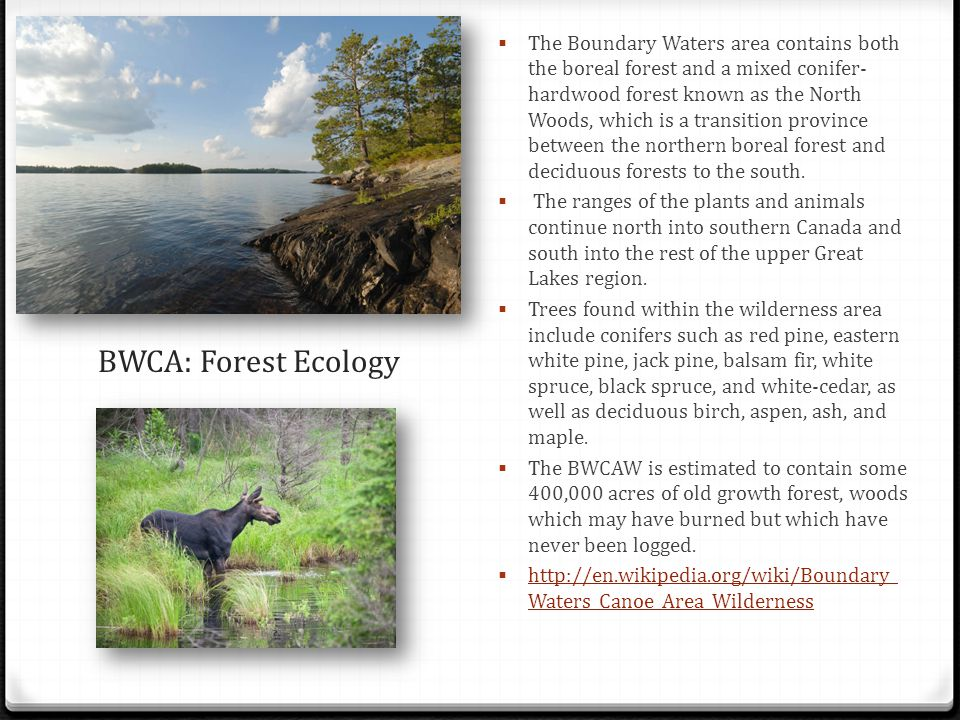 The Boundary Waters area contains both the boreal forest and a mixed conifer-hardwood forest known as the North Woods, which is a transition province between the northern boreal forest and deciduous forests to the south.