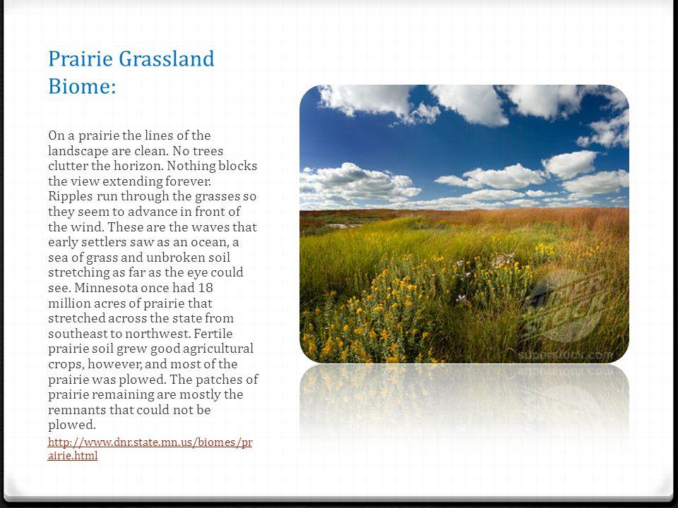 Prairie Grassland Biome: