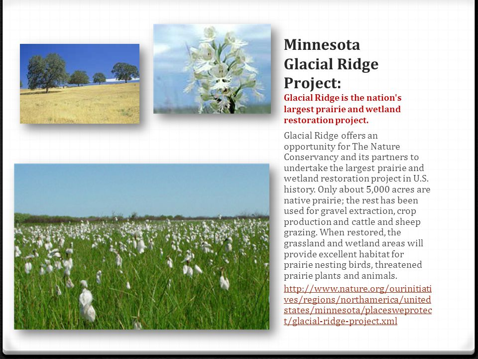 Minnesota Glacial Ridge Project: Glacial Ridge is the nation s largest prairie and wetland restoration project.