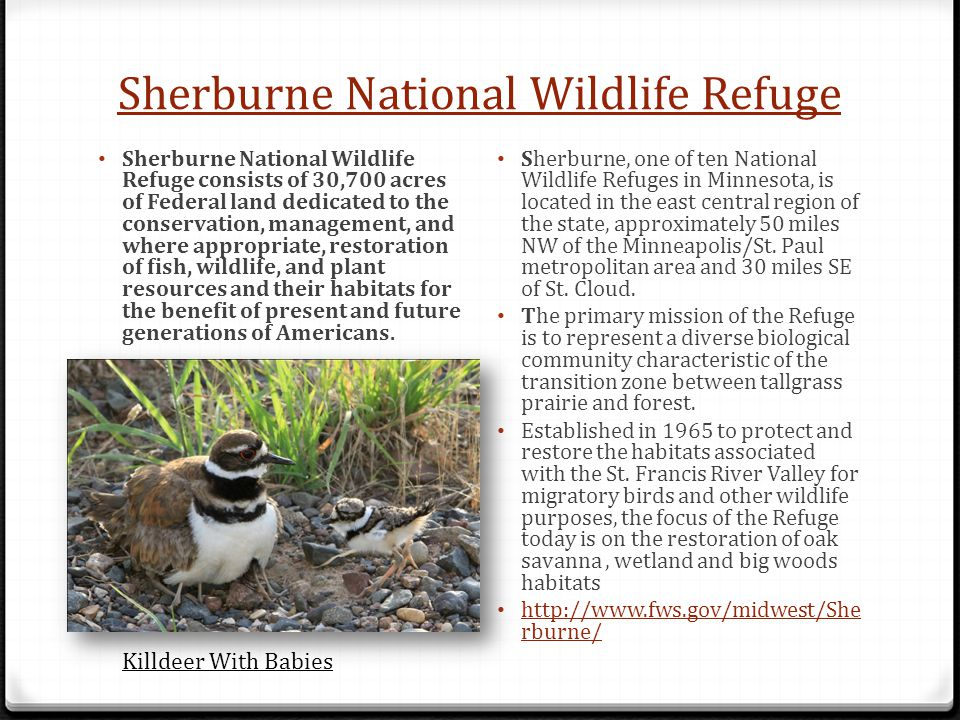 Sherburne National Wildlife Refuge