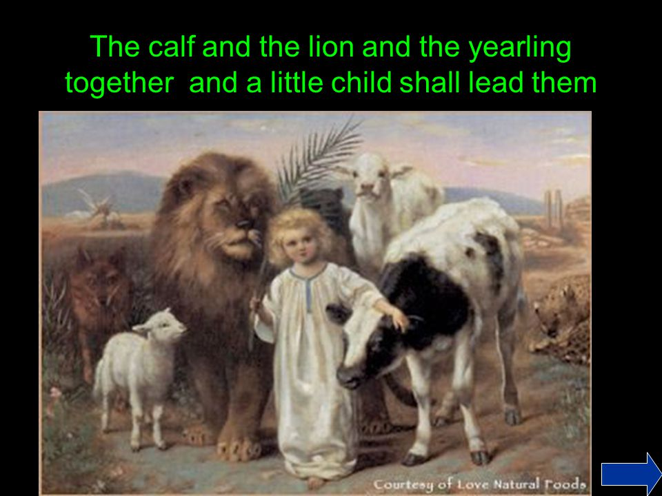 The calf and the lion and the yearling together and a little child shall lead them