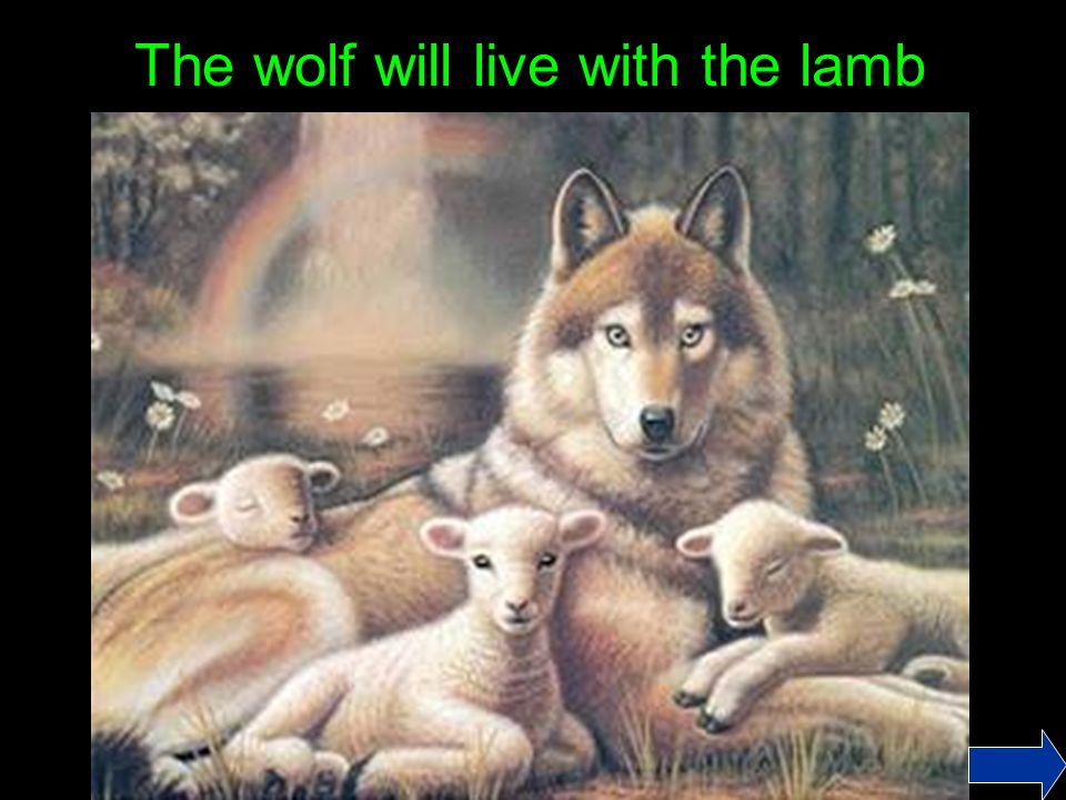 The wolf will live with the lamb
