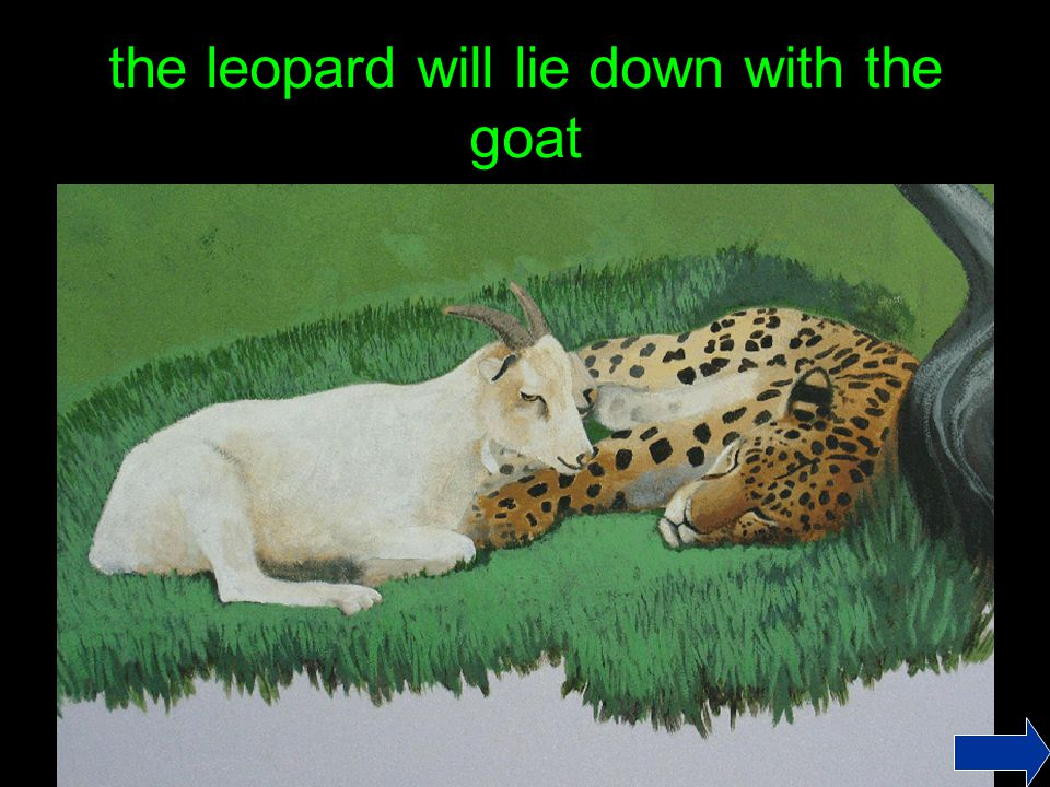 the leopard will lie down with the goat
