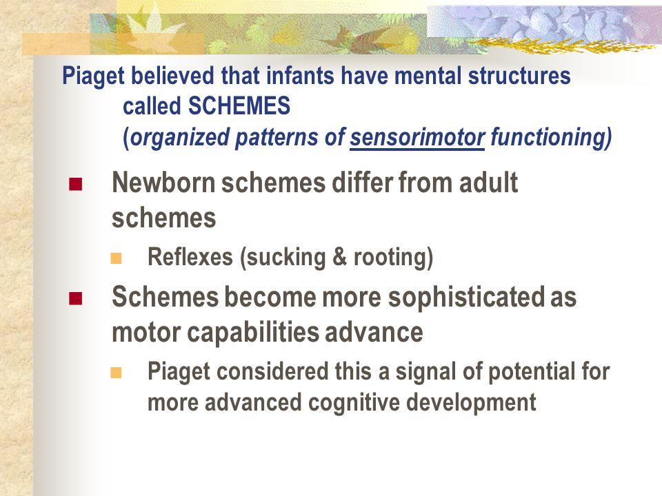 Newborn schemes differ from adult schemes