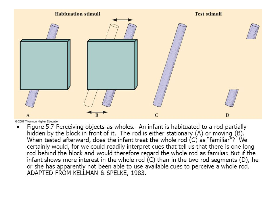 Figure 5. 7 Perceiving objects as wholes