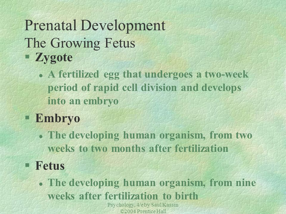 Prenatal Development The Growing Fetus