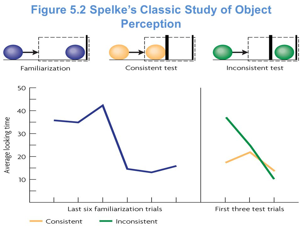 Figure 5.2 Spelke's Classic Study of Object Perception