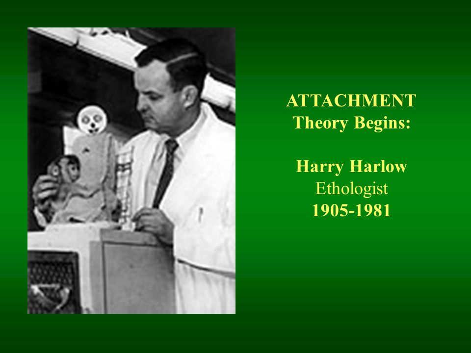 ATTACHMENT Theory Begins: Harry Harlow Ethologist 1905-1981