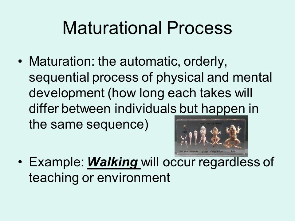 Maturational Process