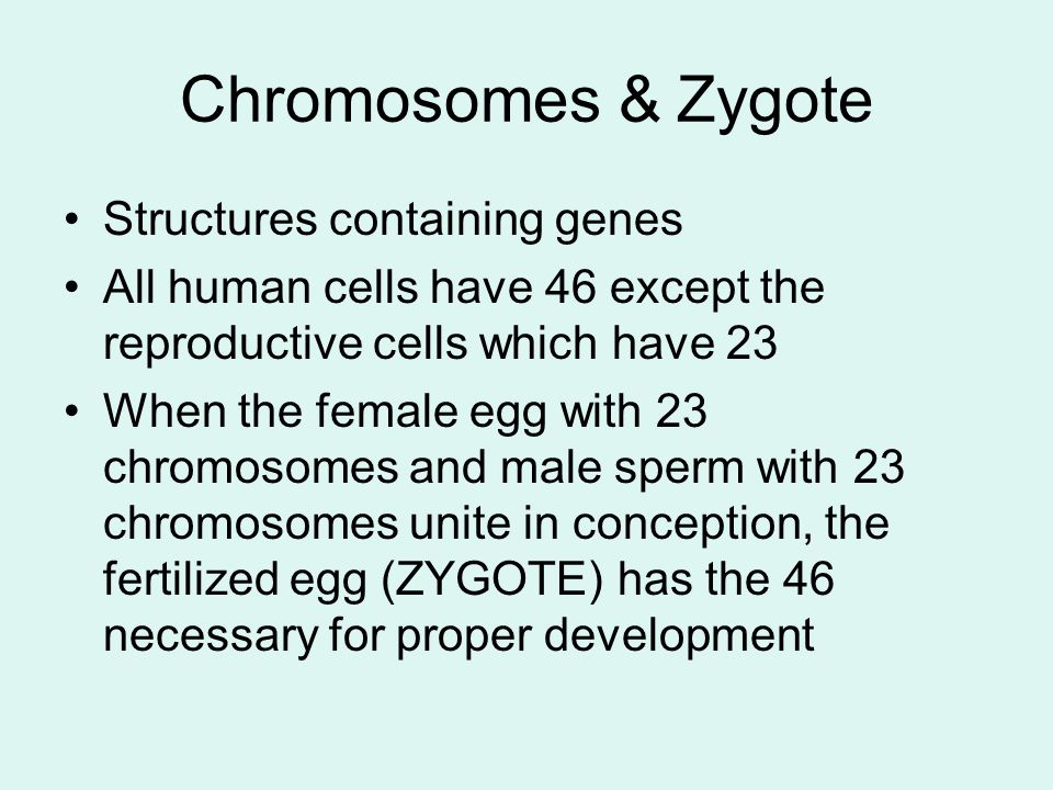 Chromosomes & Zygote Structures containing genes