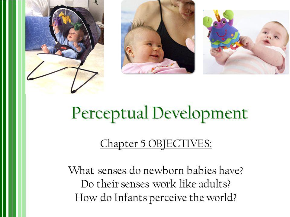 Perceptual Development