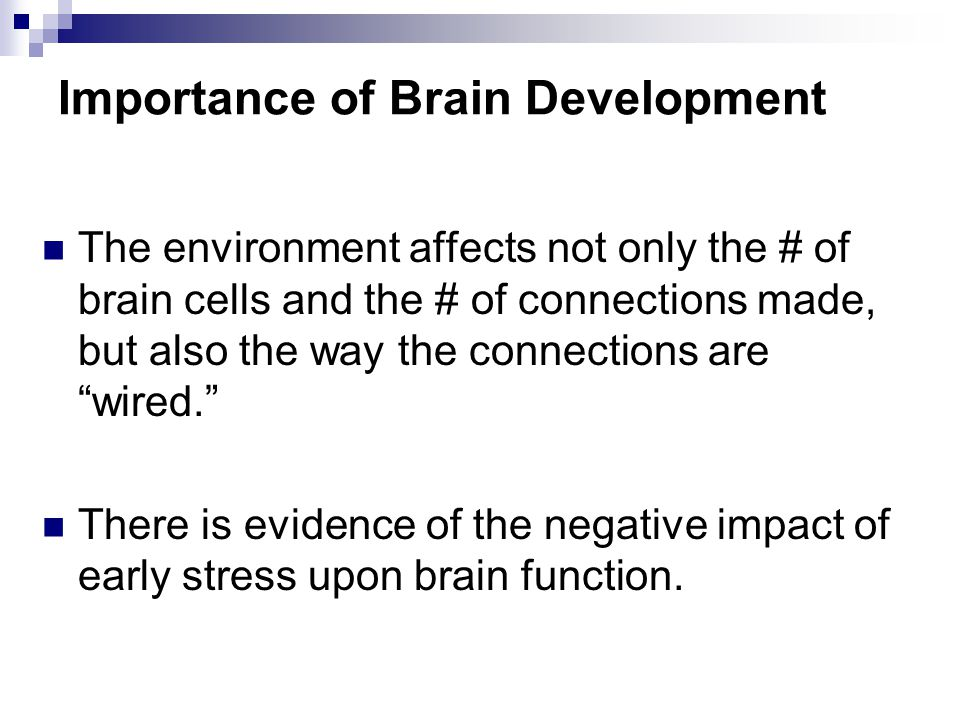 Importance of Brain Development