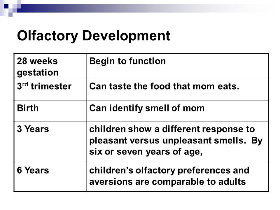 Olfactory Development
