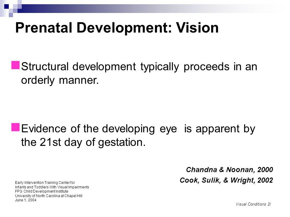 Prenatal Development: Vision