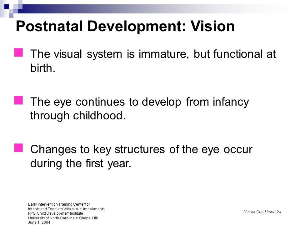 Postnatal Development: Vision