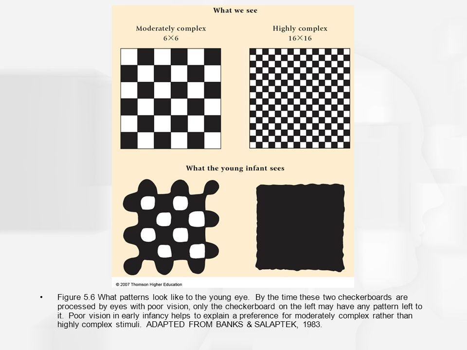 Figure 5. 6 What patterns look like to the young eye