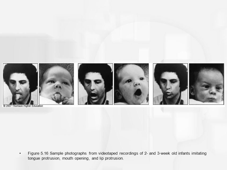 Figure 5.16 Sample photographs from videotaped recordings of 2- and 3-week old infants imitating tongue protrusion, mouth opening, and lip protrusion.