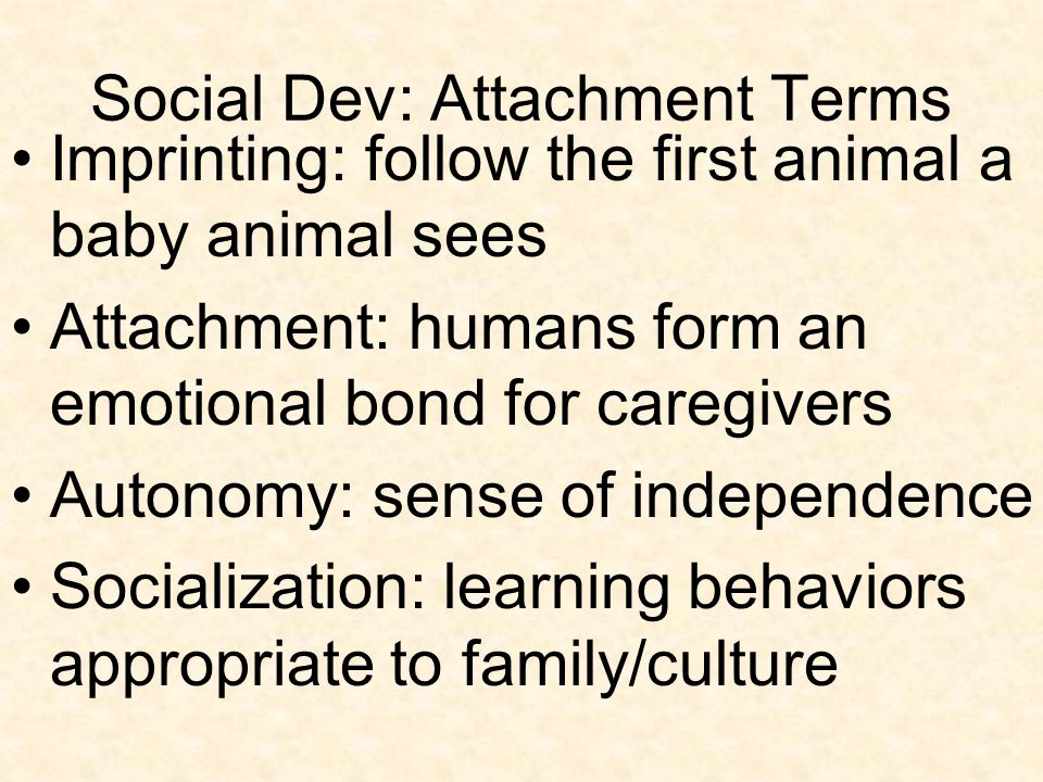 Social Dev: Attachment Terms