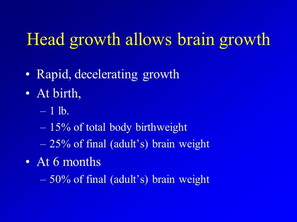 Head growth allows brain growth