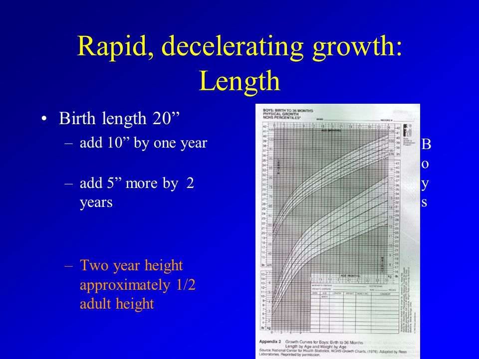 Rapid, decelerating growth: Length