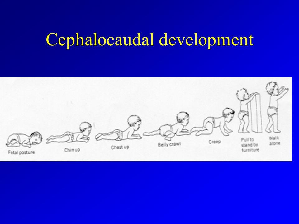 Cephalocaudal development