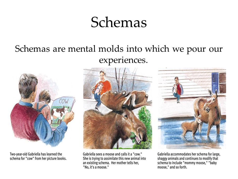 Schemas are mental molds into which we pour our experiences.