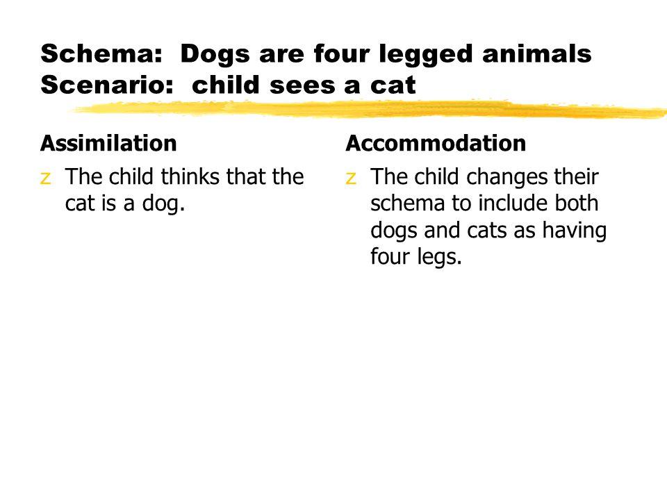Schema: Dogs are four legged animals Scenario: child sees a cat