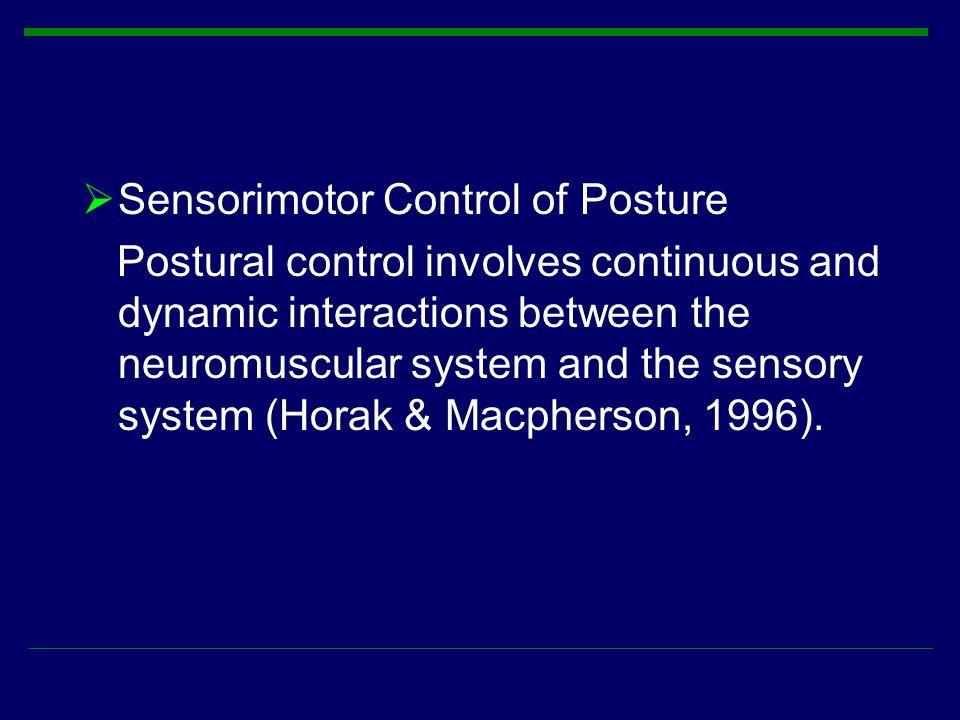 Sensorimotor Control of Posture