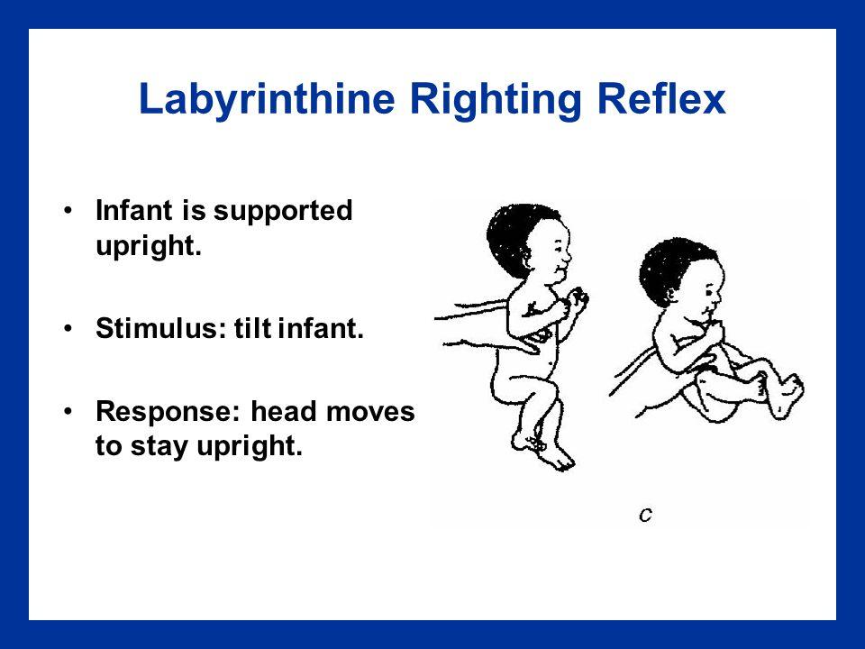 Labyrinthine Righting Reflex