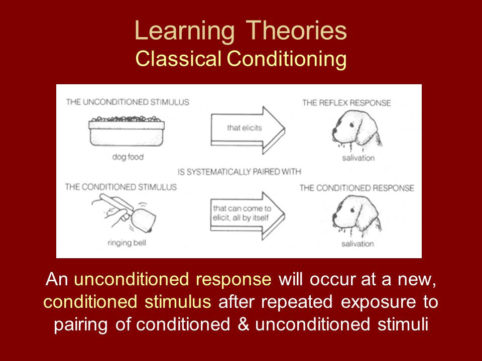 Learning Theories Classical Conditioning